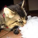 Licking Ice